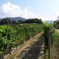 Vigneto.FriuliVG.com